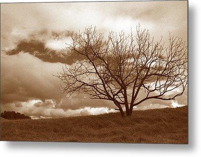 Tree In Storm Metal Print by Kathy Yates