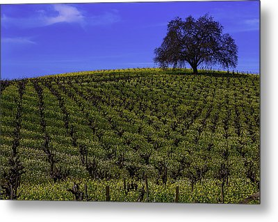 Tree In The Vineyards Metal Print by Garry Gay