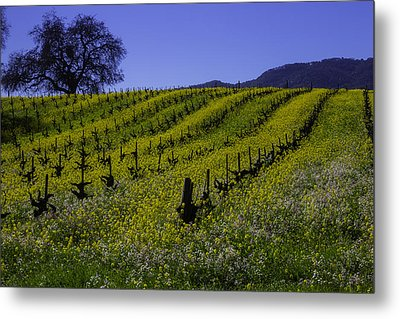 Tree  In Vineyards Metal Print by Garry Gay