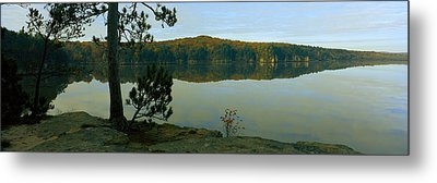 Tree On The Riverside, Wisconsin River Metal Print by Panoramic Images