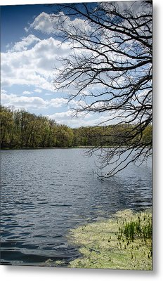 Tree Over Water Metal Print by Amy Turner
