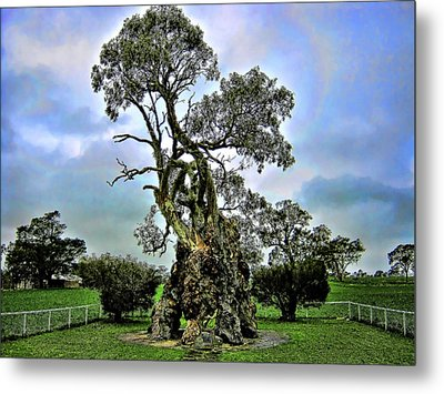 Treehouse Metal Print by Douglas Barnard