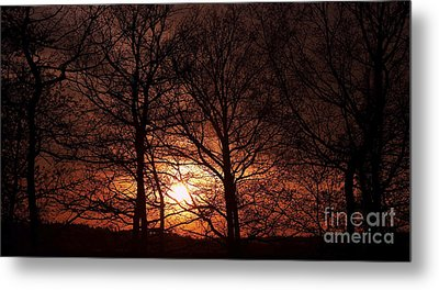 Trees At Sunset Metal Print by Michal Boubin