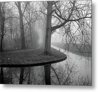 Trees In Fog Metal Print by Copyright Victor Schiferli