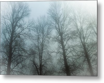 Trees In Mist Metal Print by Tetyana Kokhanets