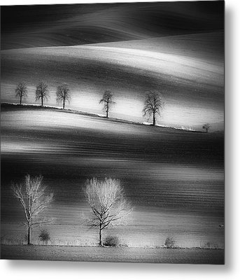 Trees Metal Print by Piotr Krol (bax)