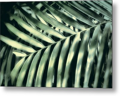 Tropical Light And Shadow Metal Print by Ann Powell