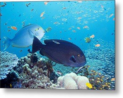 Tropical Reef Fish Metal Print by Georgette Douwma