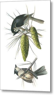 Tufted Titmoust Metal Print by John James Audubon