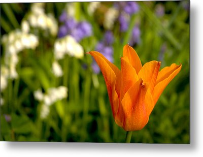 Tulip And Friends L Metal Print by Andy Smy
