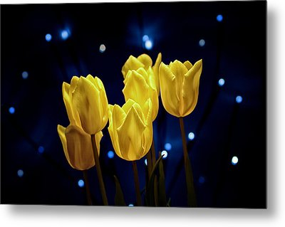 Tulip Twinkle Metal Print by Tom Mc Nemar