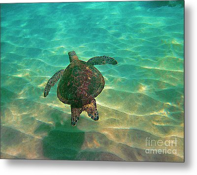 Turtle Sailing Over Sand Metal Print by Bette Phelan