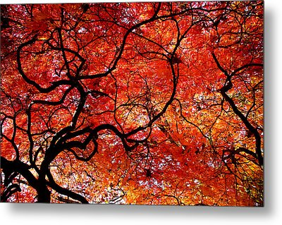 Twisted Red Metal Print by Colleen Kammerer
