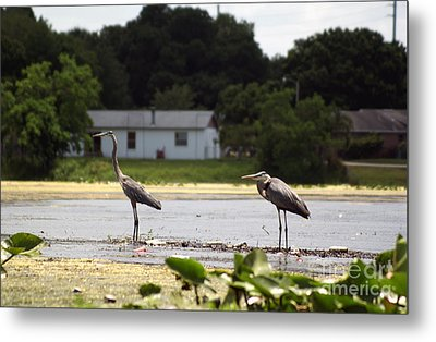 Two For One Metal Print by Jack Norton