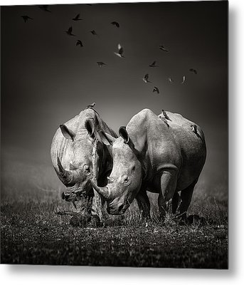 Two Rhinoceros With Birds In Bw Metal Print by Johan Swanepoel