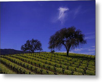 Two Trees In Vineyard Metal Print by Garry Gay