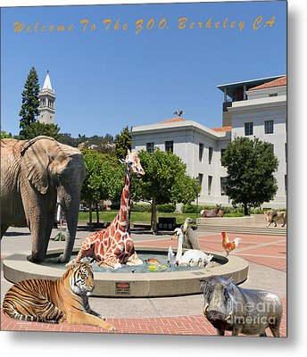 Uc Berkeley Welcomes You To The Zoo Please Do Not Feed The Animals Square And Text Metal Print by Wingsdomain Art and Photography