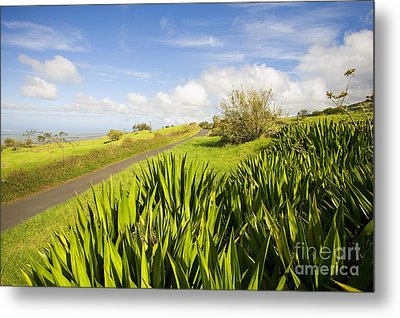 Ulupalakua Country Road Metal Print by Ron Dahlquist - Printscapes