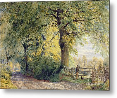 Under The Beeches Metal Print by John Steeple