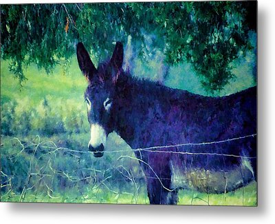 Under The Cedar Metal Print by Jan Amiss Photography