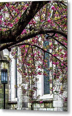 Under The Cherry Tree Metal Print by James Aiken