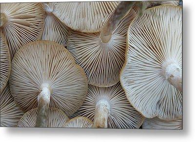 Underside Of Mushrooms Metal Print by Greg Adams Photography
