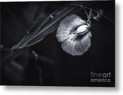 Unknown Beauty Metal Print by Marvin Spates