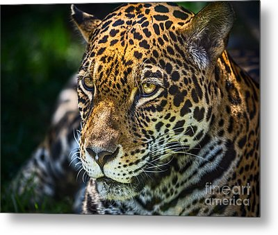 Up Close And Personal Metal Print by Jamie Pham