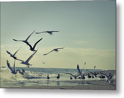 Up Up And Away Metal Print by Laura Fasulo