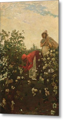 Upland Cotton Metal Print by Winslow Homer