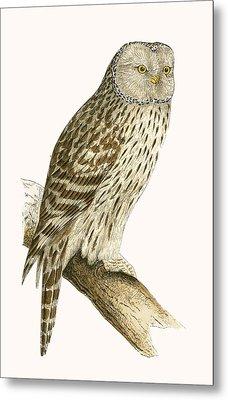 Ural Owl Metal Print by English School