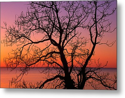 View Of Ocean Through Silhouetted Tree Metal Print by Panoramic Images