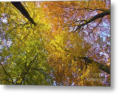 View To The Top Of Beech Trees Metal Print by Heiko Koehrer-Wagner