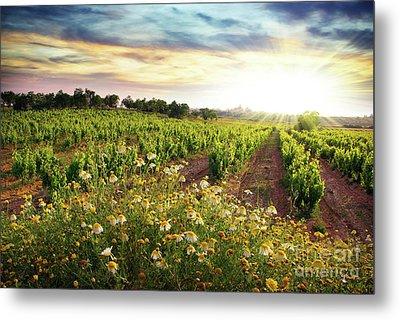 Vineyard Metal Print by Carlos Caetano