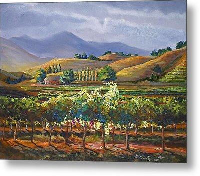 Vineyard In California Metal Print by Heather Coen
