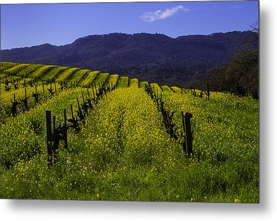 Vineyard Mustard Metal Print by Garry Gay