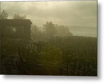 Vineyards Beside A Villa In The Fog Metal Print by Todd Gipstein