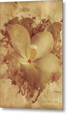Vintage Paper Magnolia Metal Print by Jorgo Photography - Wall Art Gallery