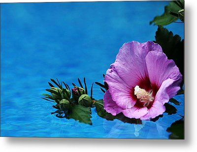 Violet Satin Metal Print by Debbie Oppermann