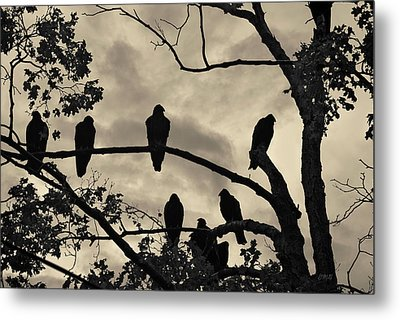 Vultures And Cloudy Sky Metal Print by David Gordon