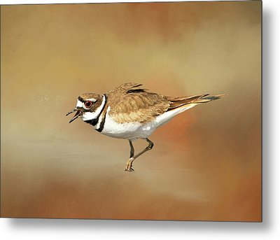 Wading Killdeer Metal Print by Donna Kennedy