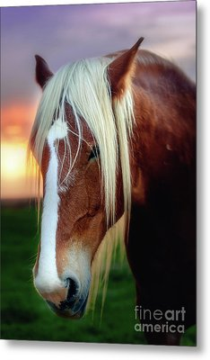 Waiting For My Master Metal Print by Tamyra Ayles