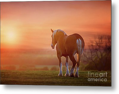 Watching The Sunset Metal Print by Tamyra Ayles