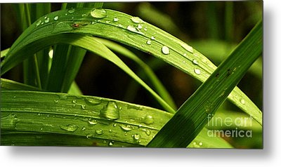 Water Drops Metal Print by Mario Brenes Simon