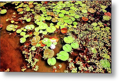 Water Lilies  Metal Print by Genevieve Esson