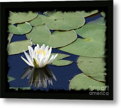 Water Lily With Black Border Metal Print by Carol Groenen