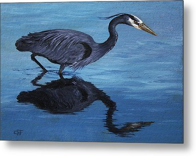 Water Stalker - Blue Heron Metal Print by Crista Forest