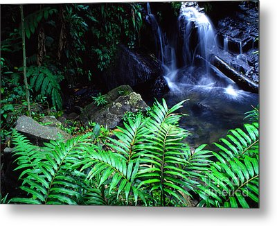 Waterfall El Yunque National Forest Metal Print by Thomas R Fletcher