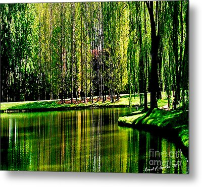 Weeping Willow Tree Reflective Moments Metal Print by Carol F Austin