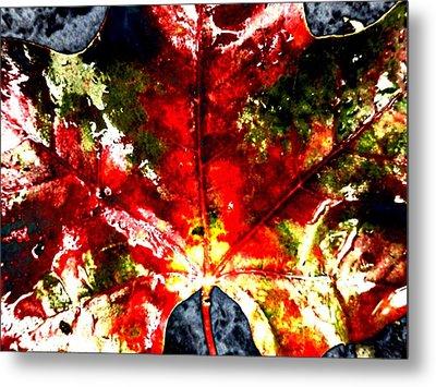 Wet Single Leaf Metal Print by Beth Akerman